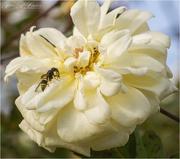 12th Sep 2020 - Wasp