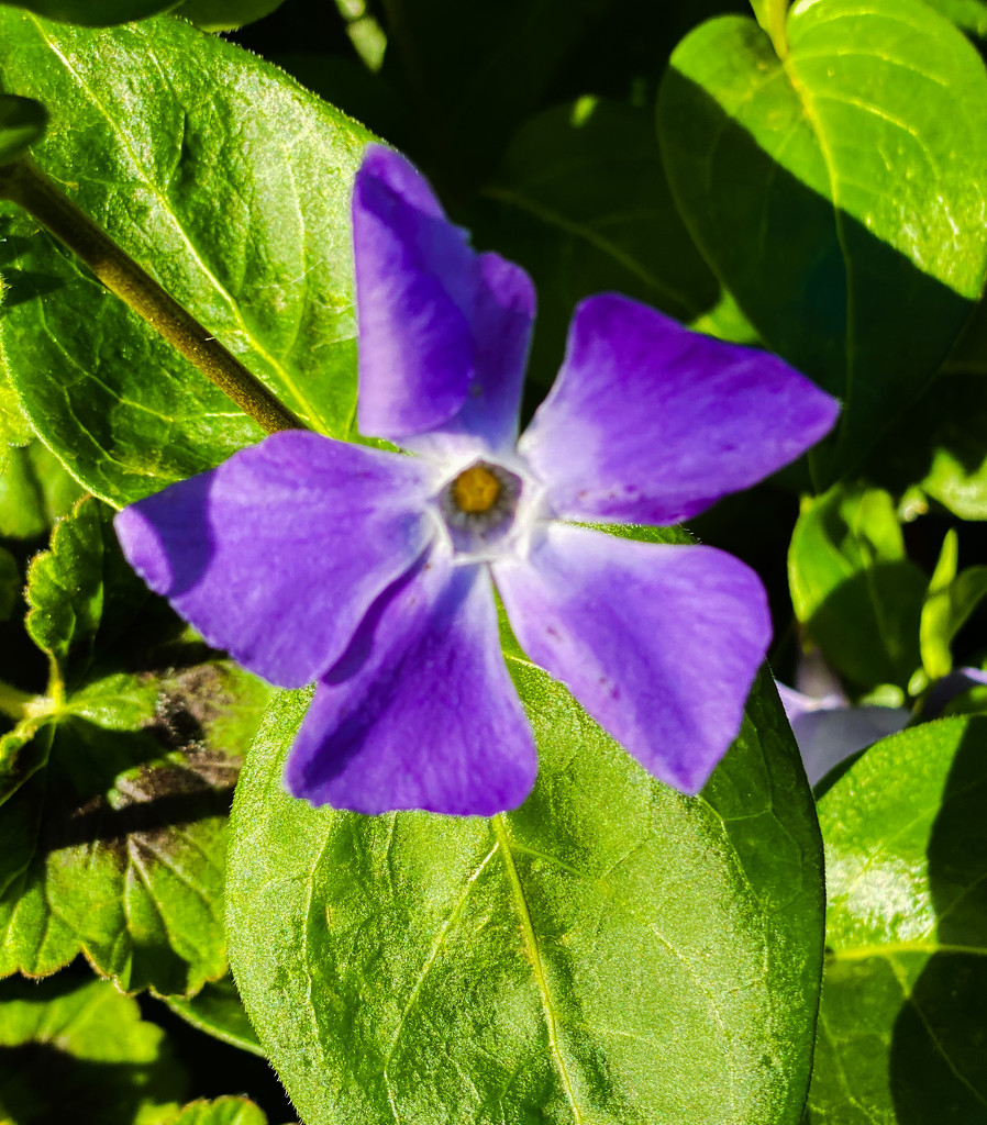 Purple by erinr