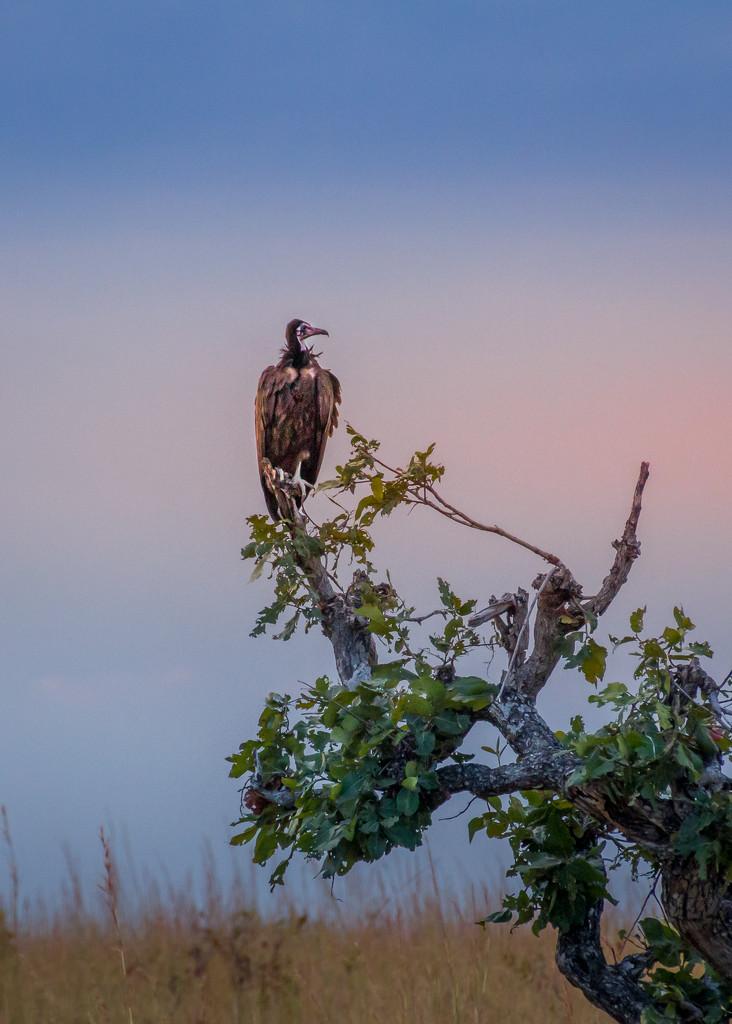 Nature's First Alert by zambianlass