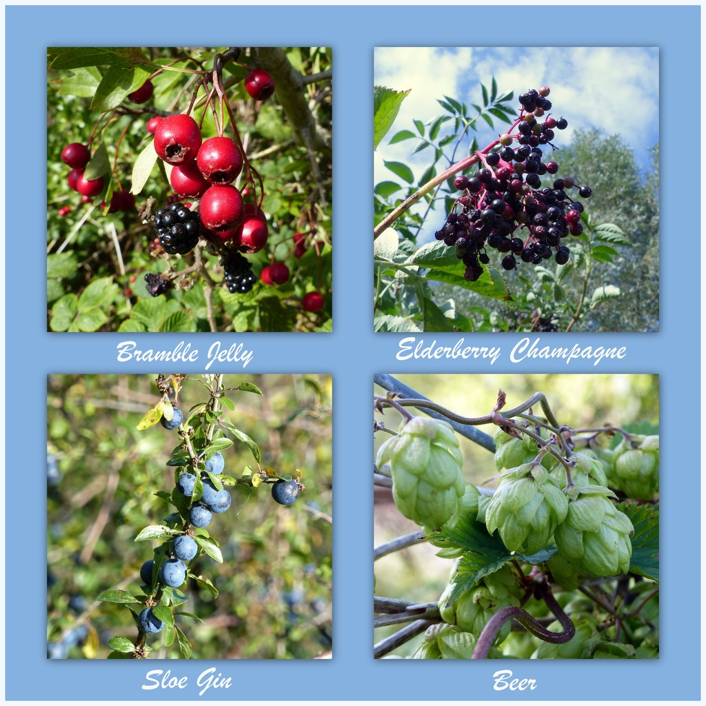 Nature's bounty by judithdeacon