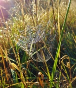 7th Sep 2020 - Nature's Weavers