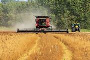 13th Sep 2020 - Combine Harvester