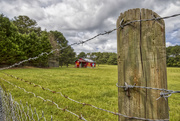 13th Sep 2020 - Barbed Wire Fence Post 9.13.20