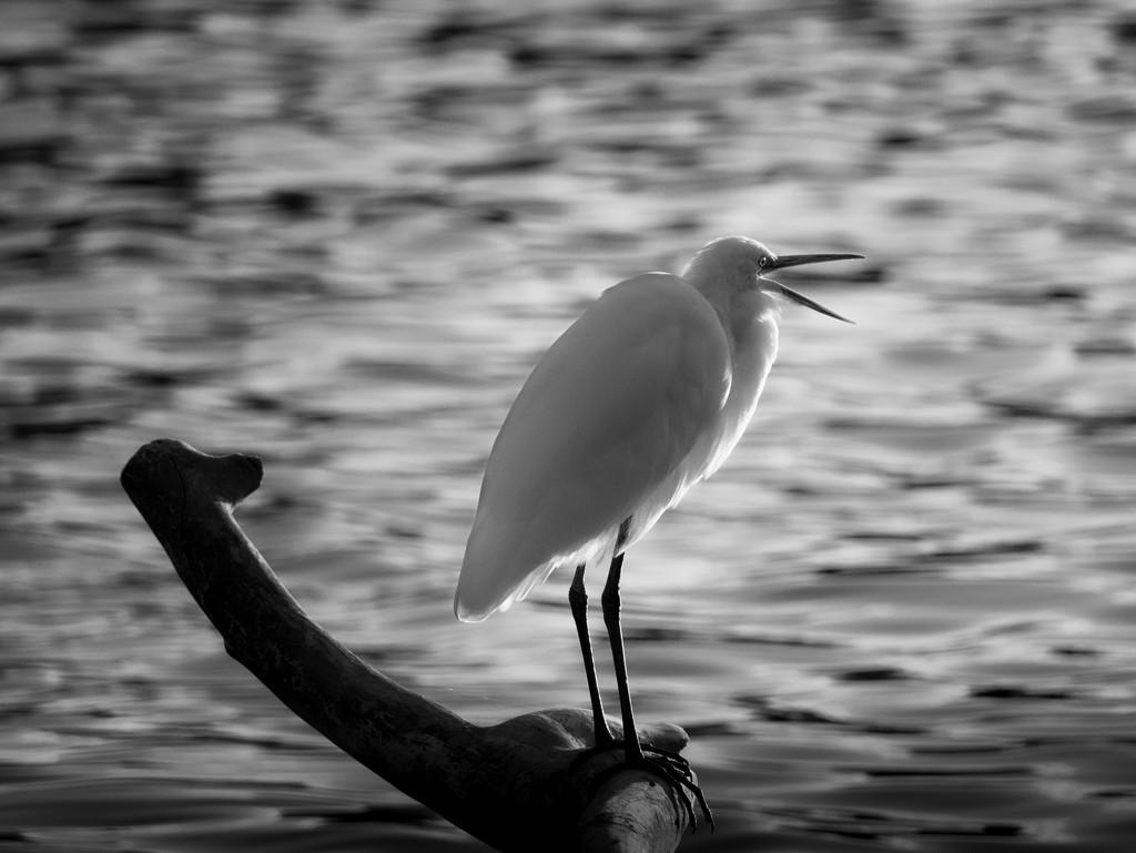 squawk! by northy