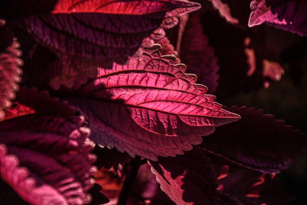 Texture, Light, Shadow, and Color by kareenking
