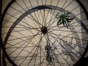 13th Sep 2020 - Wheels Go Round & Round & ...