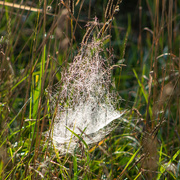 13th Sep 2020 - Oh, what a tangled web they weave