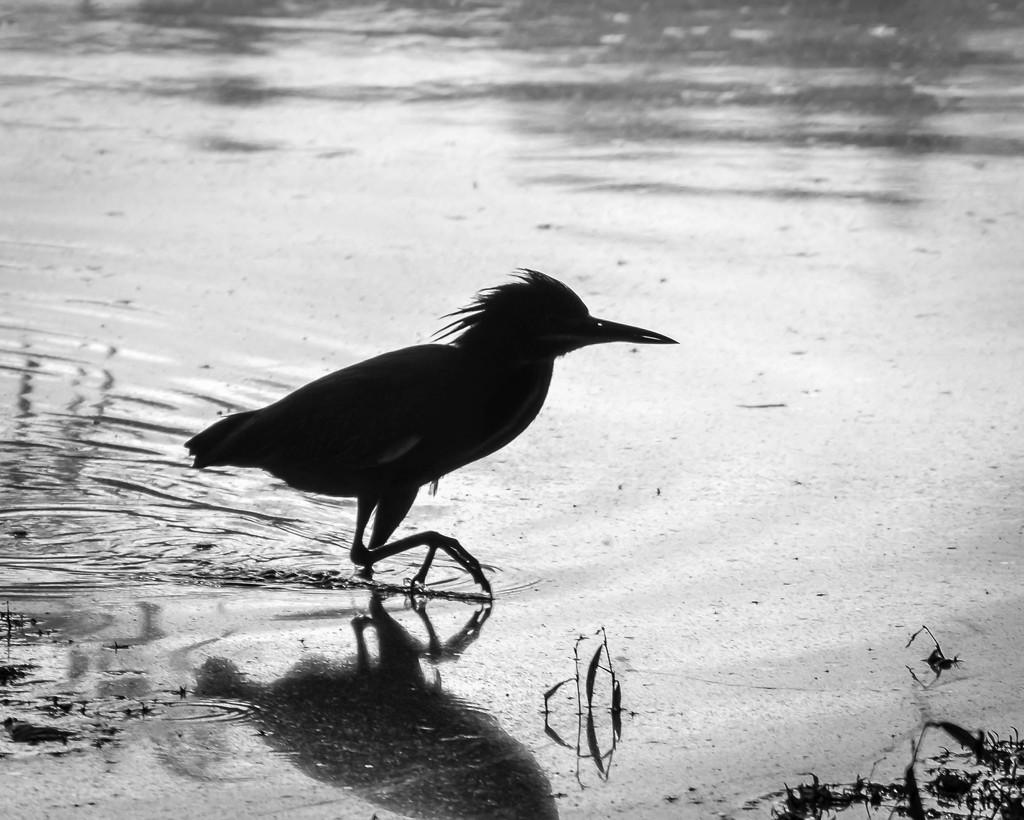 Heron Silhouette by marylandgirl58