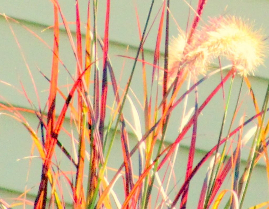 Reeds by bruni