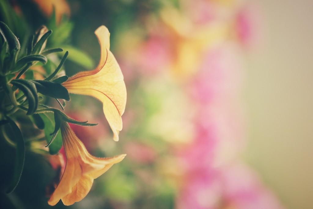 flowers by kaldara