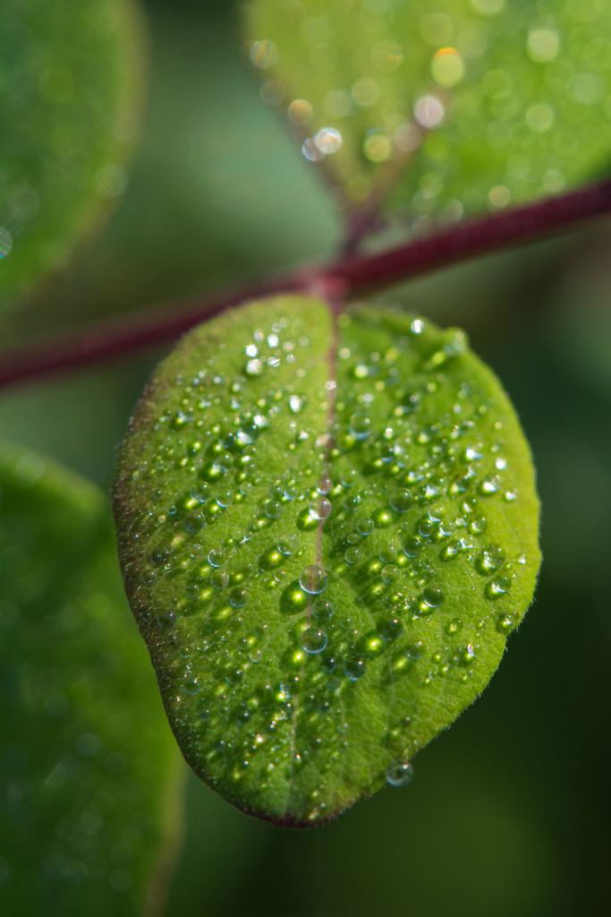 Teardrops Will Kiss The Morning Dew by rumpelstiltskin