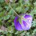 Rainy morning: purple flower