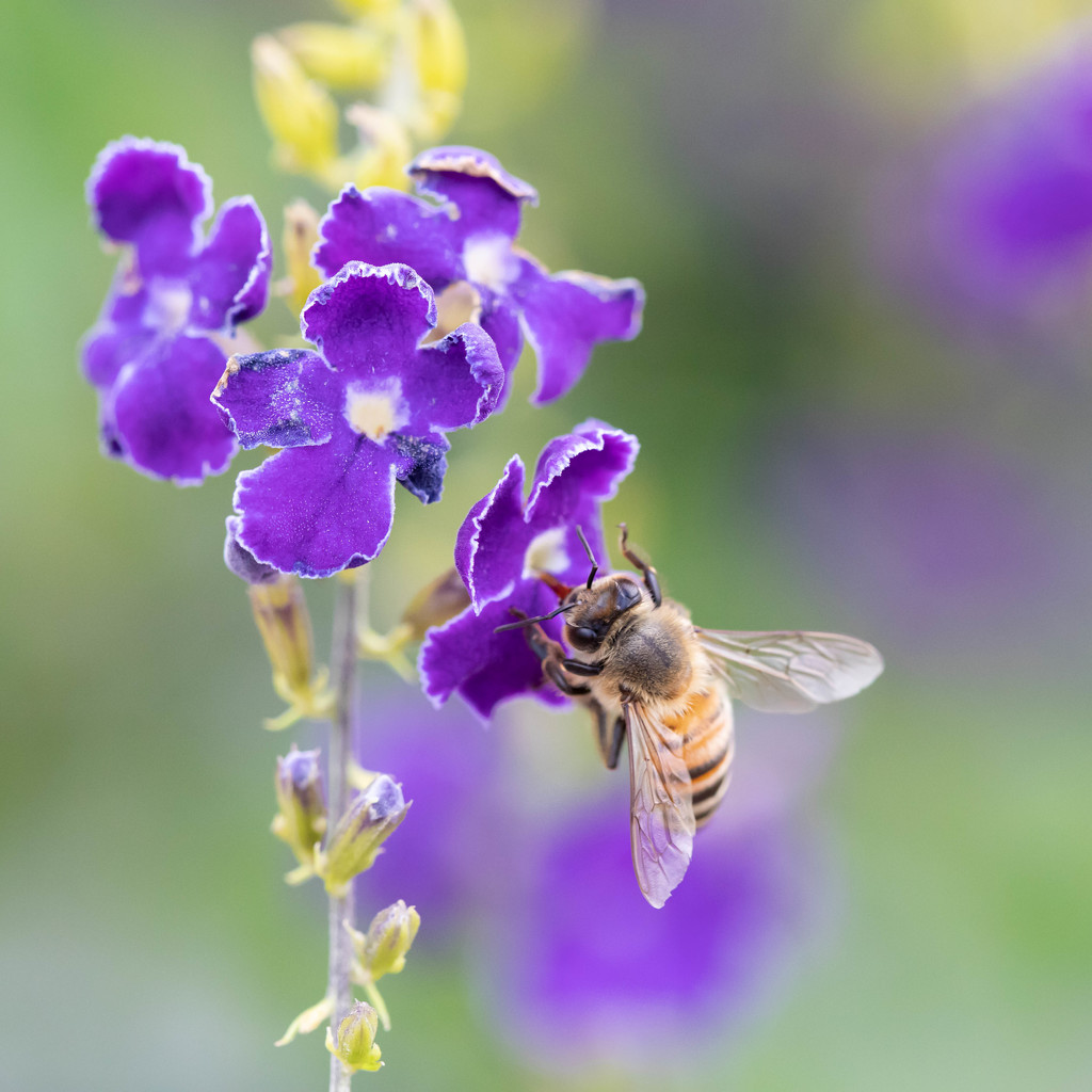 Bee-ing busy by dutchothotmailcom