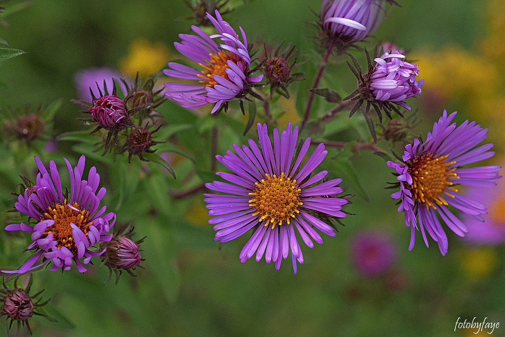 Wild Flower's by fayefaye