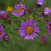 Wild Flower's