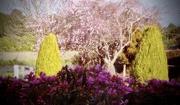 15th Sep 2020 - Blossom