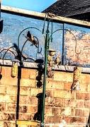 15th Sep 2020 - Birds in the garden