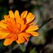 Autumn Sunshine by thistle01