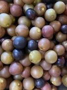 15th Sep 2020 - Muscadines...