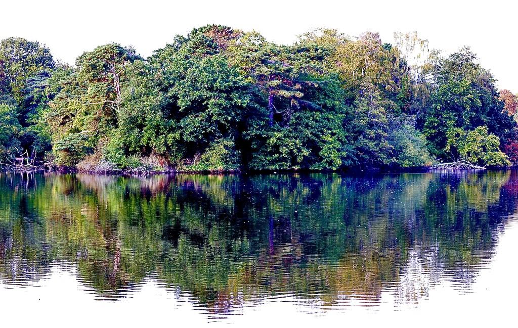 Island Reflecting in the Lake by carole_sandford