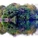 Island Reflecting in the Lake