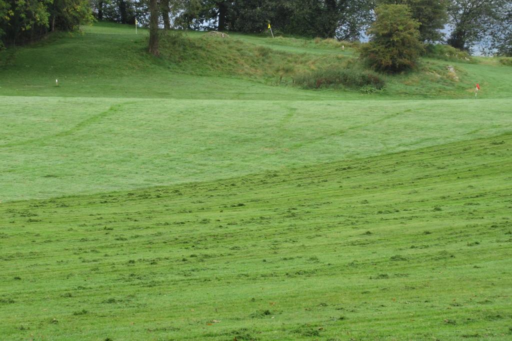 dew tracks cut grass by anniesue