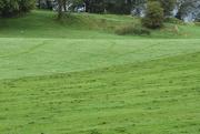 15th Sep 2020 - dew tracks cut grass