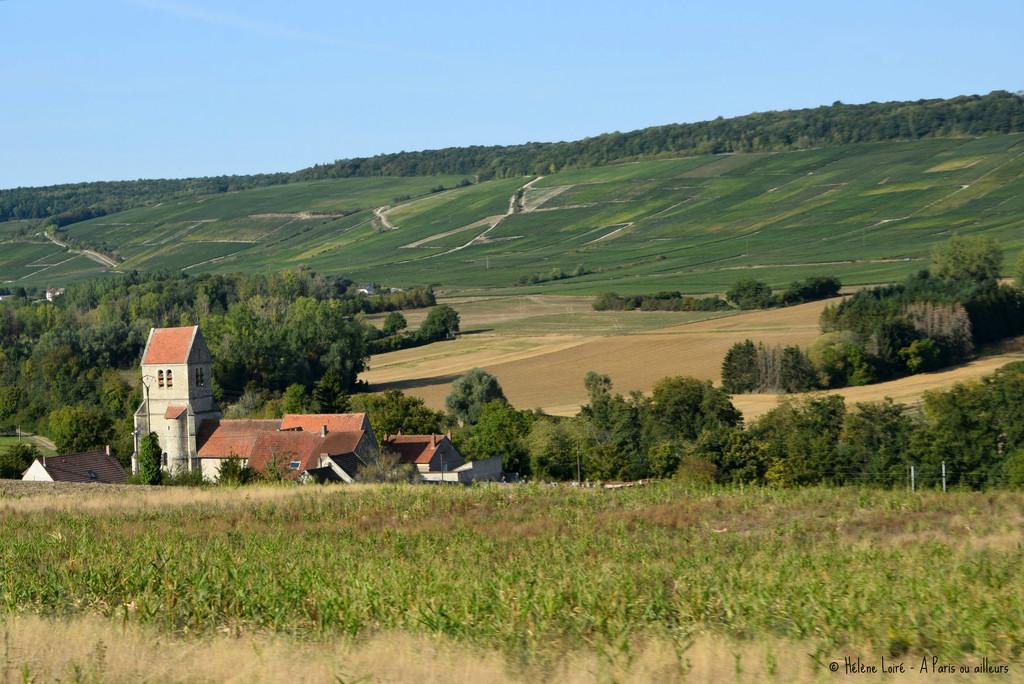 Champagne's vineyard by parisouailleurs