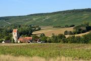 11th Sep 2020 - Champagne's vineyard
