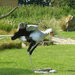 Secretary Bird Killing a 'Snake' (GIF)
