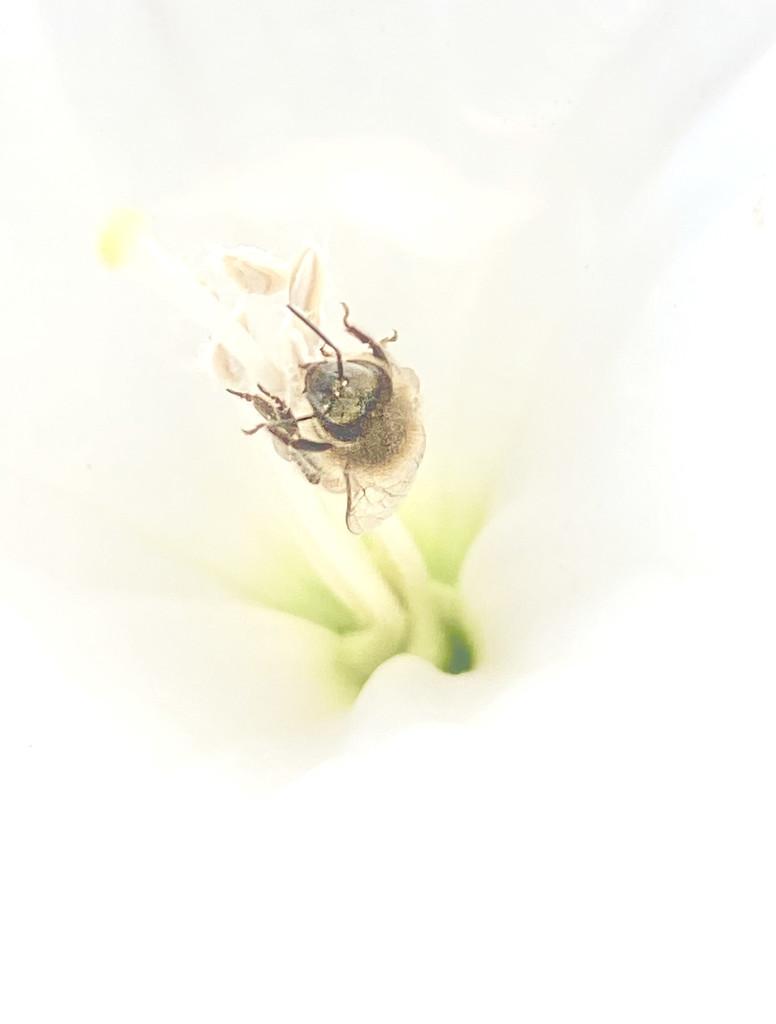 Pollen Shopping by joysfocus
