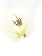 15th Sep 2020 - Pollen Shopping
