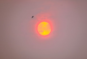 15th Sep 2020 - Wildfires Sun ii