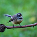 It's spring, time to sing! by maureenpp