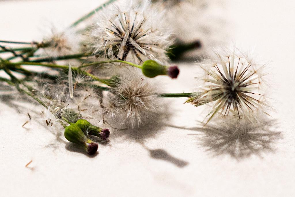 Garden gems  by sugarmuser