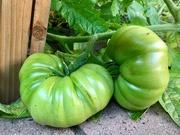 16th Sep 2020 - 16. Planting/harvest