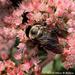 Bumblebee Heaven by falcon11