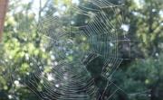 16th Sep 2020 - Spider Artistry