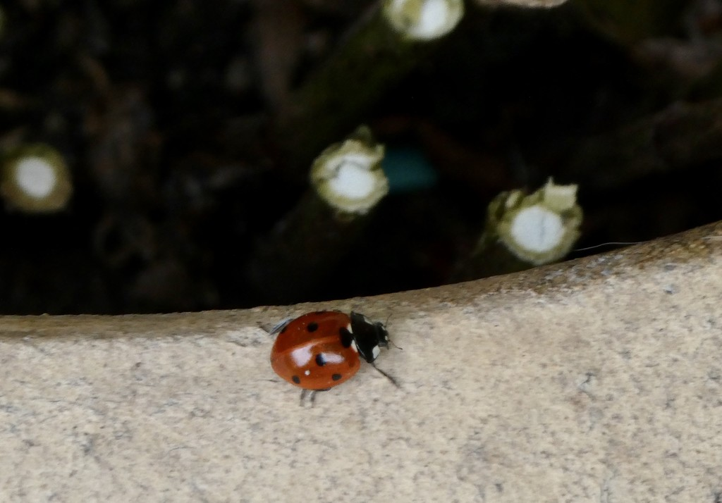 Hello ladybirds  by orchid99
