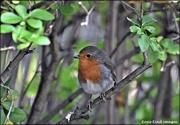 16th Sep 2020 - My beautiful little robin