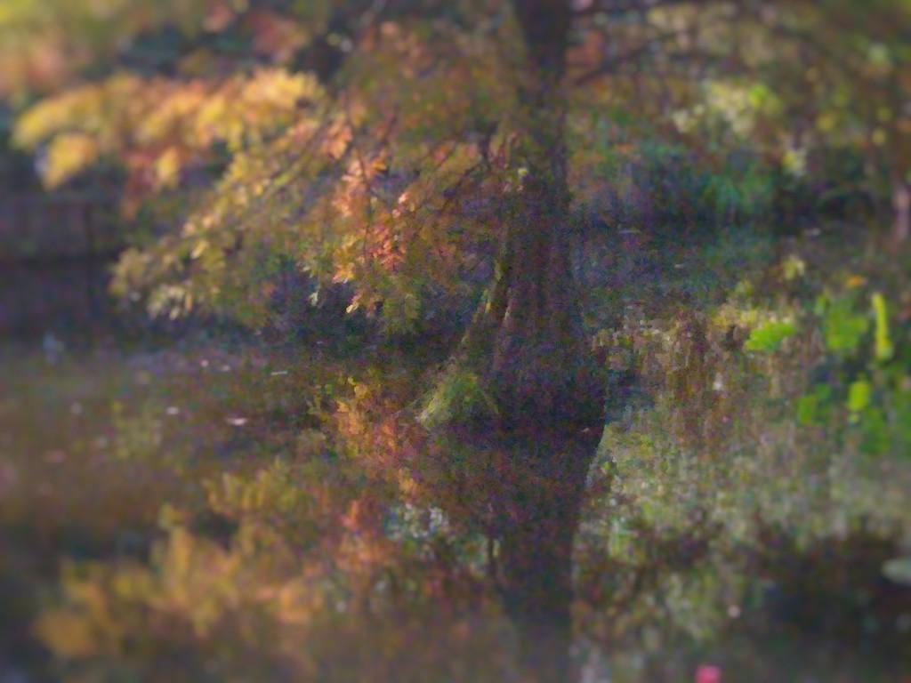 Autumnal Reflection by 30pics4jackiesdiamond