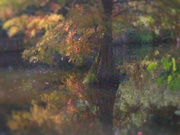 16th Sep 2020 - Autumnal Reflection