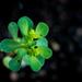 Macro Weeds