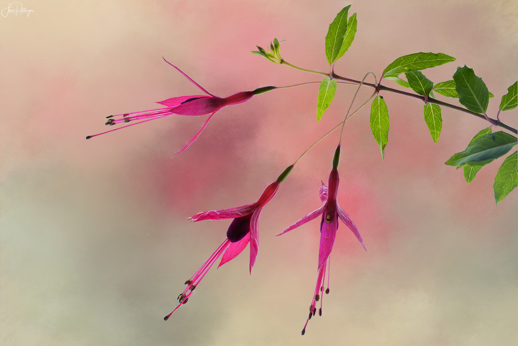 Light Box Fuscia with Texture by jgpittenger
