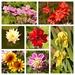 Late Summer Garden Snapshot 1