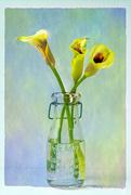 16th Sep 2020 -  little bouquet