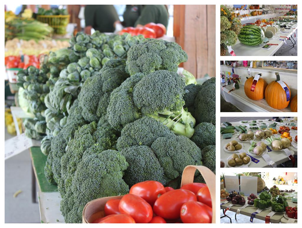 September Harvest by spanishliz