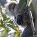 you again? by koalagardens