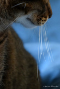 16th Sep 2020 - whiskers