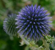 16th Sep 2020 - 0916 - Flower